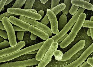 koli-bacteria-123081__340