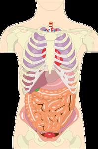 organs-2426961__340